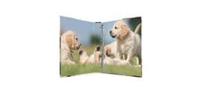 Ringbuch A4/4R/25mm Hunde HERMA 19358 Produktbild